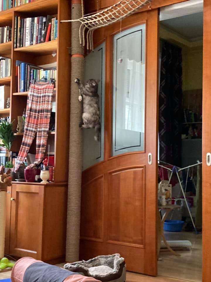 Rékáék egy hosszú kaparófát szereltek az ajtó mellé, fölötte pedig hálót vezettek el. Szinte belesimul a környezetbe, és mégis nagyon hasznos!