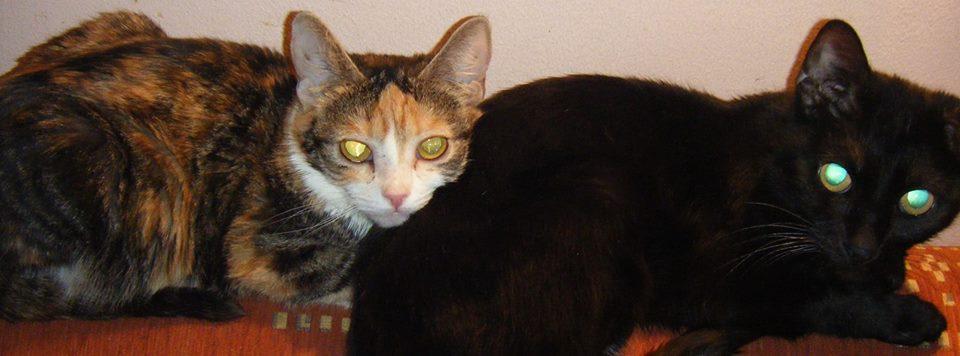 Ribi (fekete) - ivaros nőstény, füle daganatos, és össze van zsugorodva