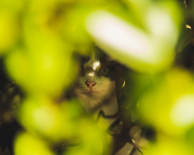 selective-focus-photo-of-cats-face-behind-green-leaves-2419176.jpg