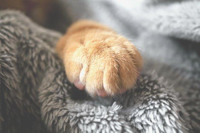 selective-photo-of-brown-pet-paw-1440406.jpg
