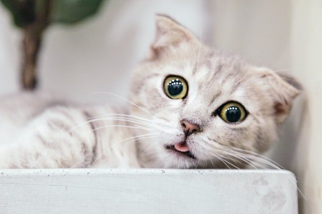 shallow-focus-photography-of-cat-2286016.jpg