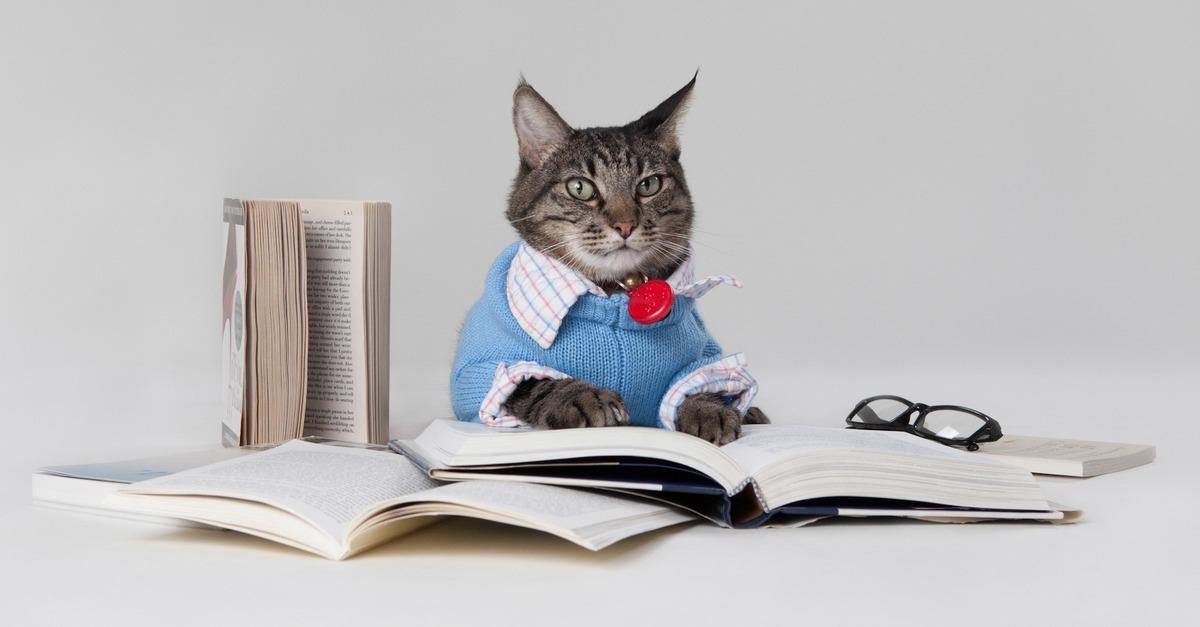 smart-cat.jpg