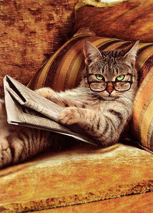 smart-cat_1.jpg