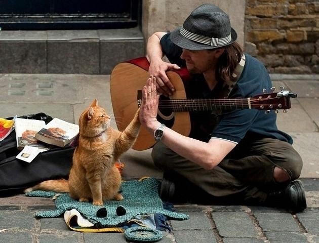 street-cat02.jpg