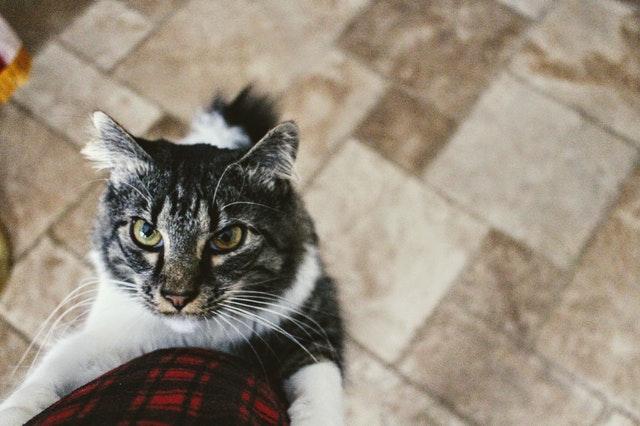 tabby-cat-812421.jpg