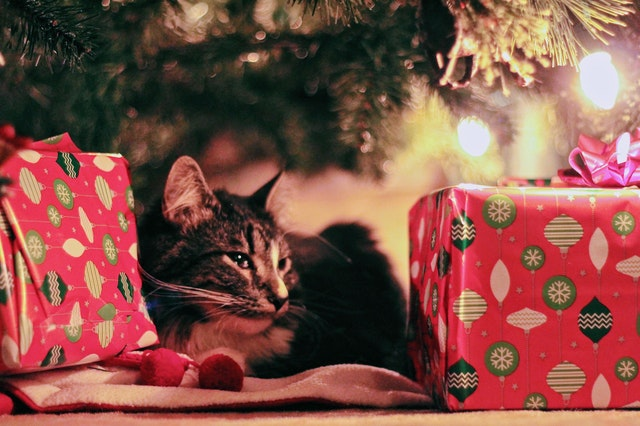 tabby-cat-lying-under-christmas-tree-with-gifts-770012.jpg