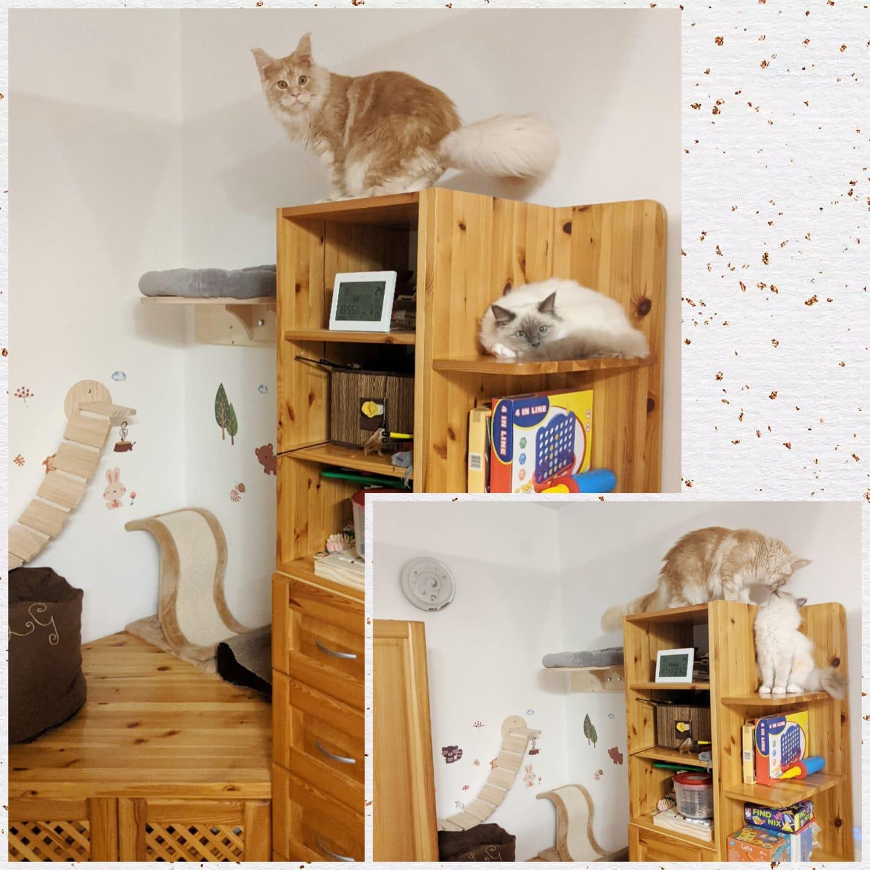 Viktória mondja: 'Mi a két szekrény közti részre készítettünk nekik feljárót, hogy birtokba vehessék a szekrény tetejét, és a legfelső polcokat is, mert a klasszikus macskavár legfelső szintjéért mindig versenyeztek. Így már mindenki lehet a magasban, ki a macskaváron, ki a szekrényen, vagy mindkettő a szekrényen, ha úgy szeretnék.'