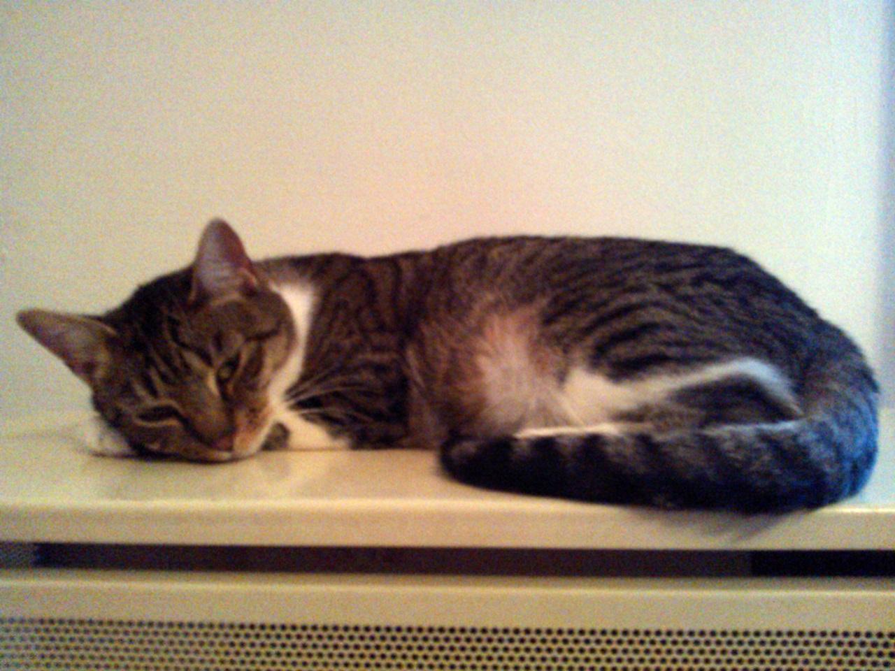 Lucky-t fél évesen mentettem az utcáról. Pár napig ki akart menni, de most már inkább a radiátoron pihizik, és nagyokat játszik a többi cicával :)