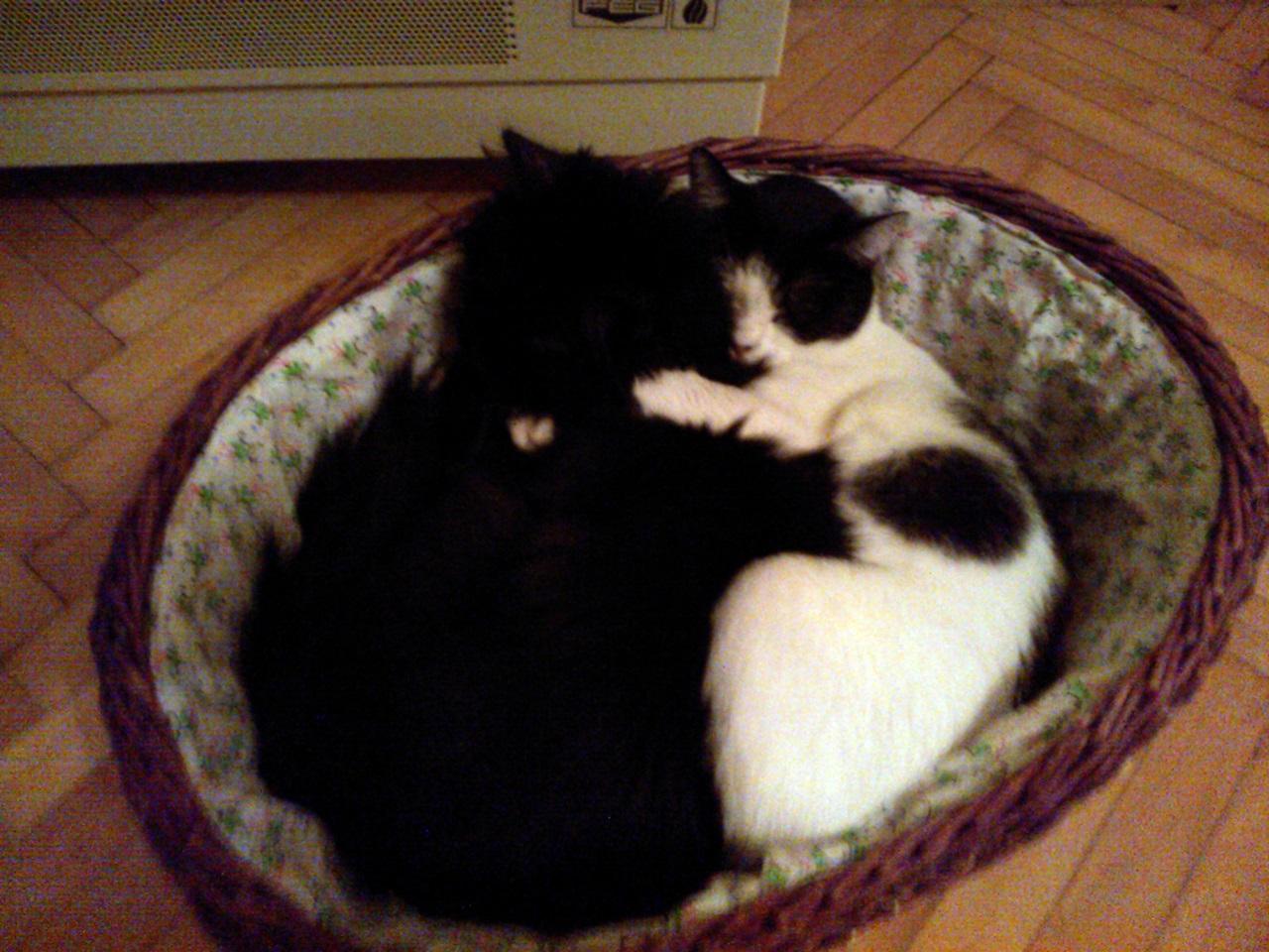 Együtt aludni valakivel még jobb :)