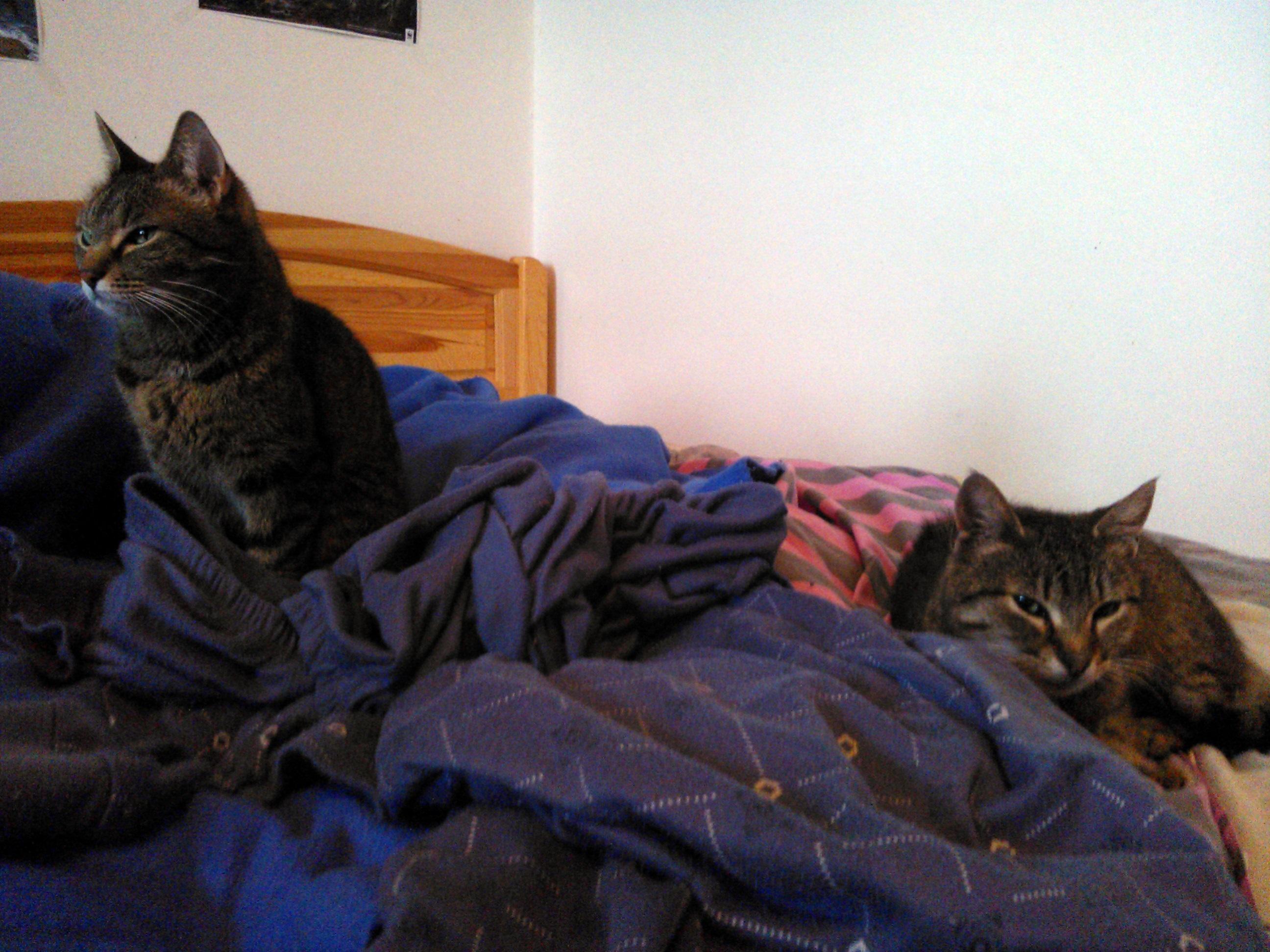 Egy ágyban a... Kemivel :)