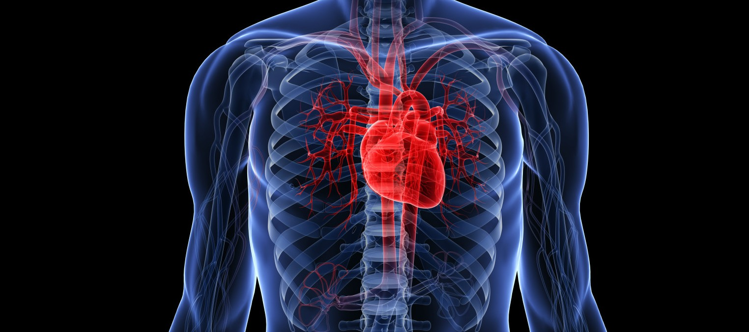 human-heart-facts.jpg