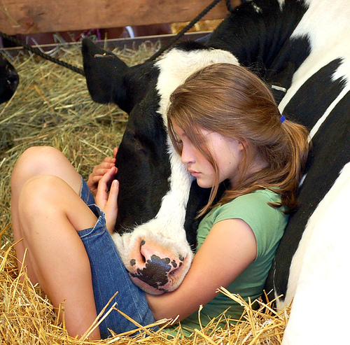little_girl_and_cow.jpg