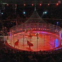 A cirkusz: egy inspiráló történet...