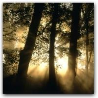 Beszélő fák