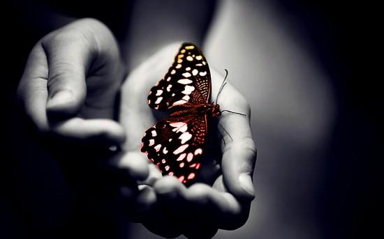 92-butterfly-angie56-baratsag-hands-Love-this-butterflies-buterflys-hand-BA_large.jpg