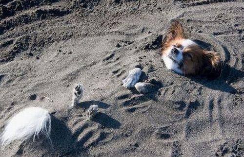 pihi-a-tengerparton.jpg
