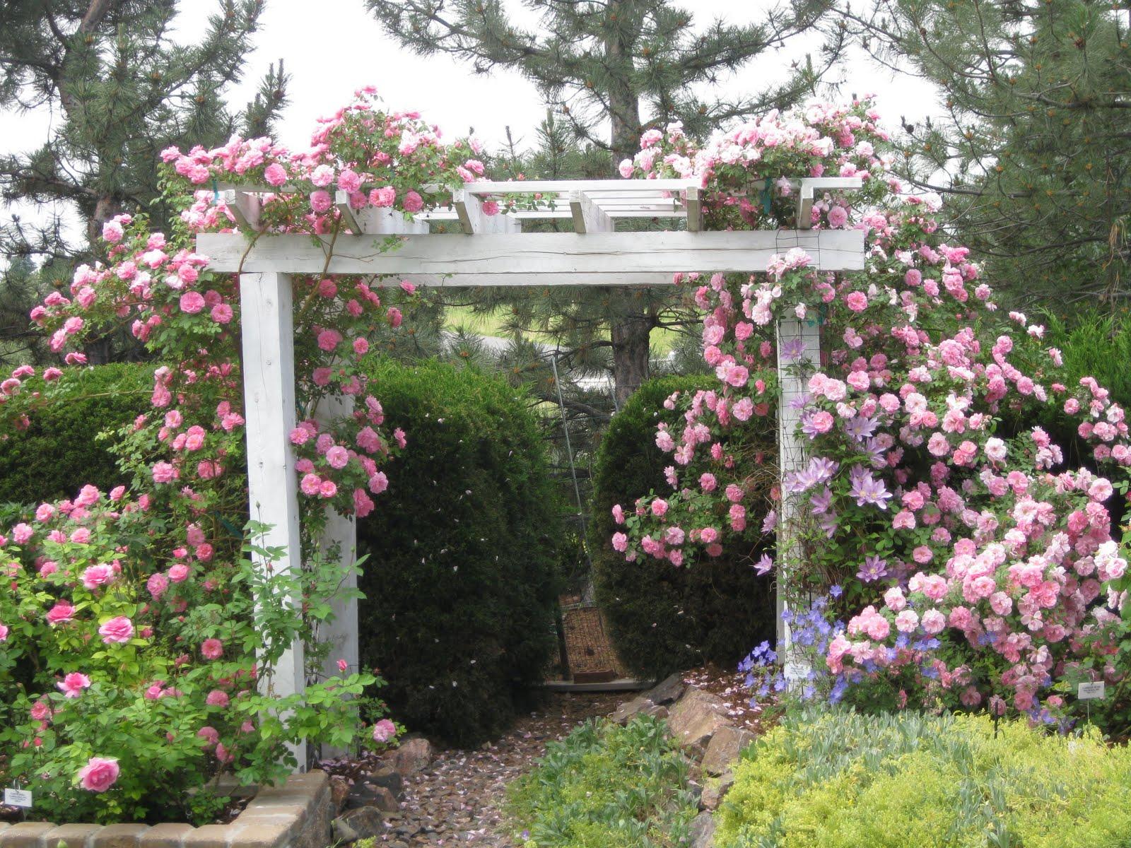Rose Garden 6.JPG