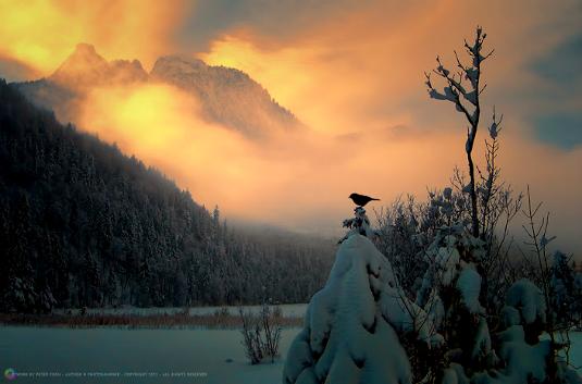 foggy-friday-bird-mountains-peter-from_535.jpg