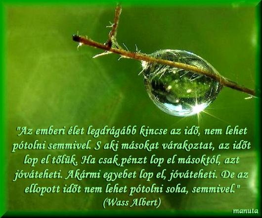 038wass_albert_530.jpg