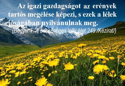 078igazi_gazdagsag_530_2.jpg