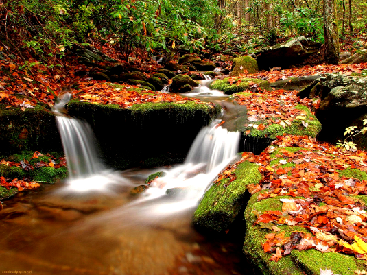 _creek-in-autumn-_535.jpg