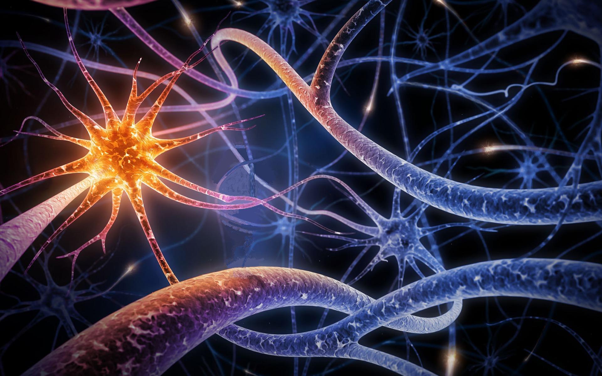 neurohiruga Evrope2.JPG