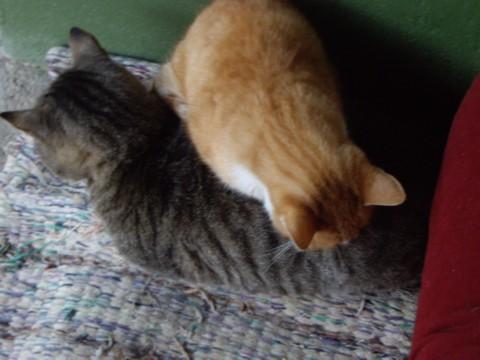 macskoszok.jpg