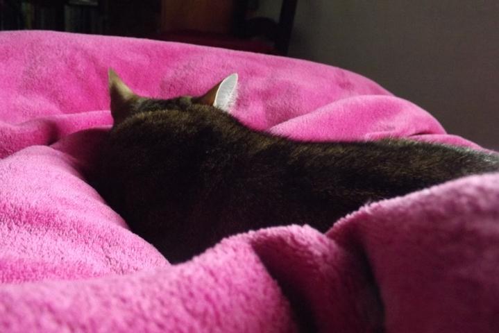 és az ágyamban.... persze azért van ott a takaró, azon csicsikált.. :-)