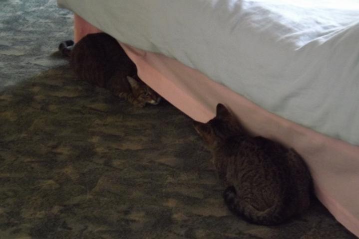 néha beengedtem hozzá Misi cicát, ilyenkor volt nagy hancúrozás, bújócska meg minden.... Döncivel nem barátkoztak össze...