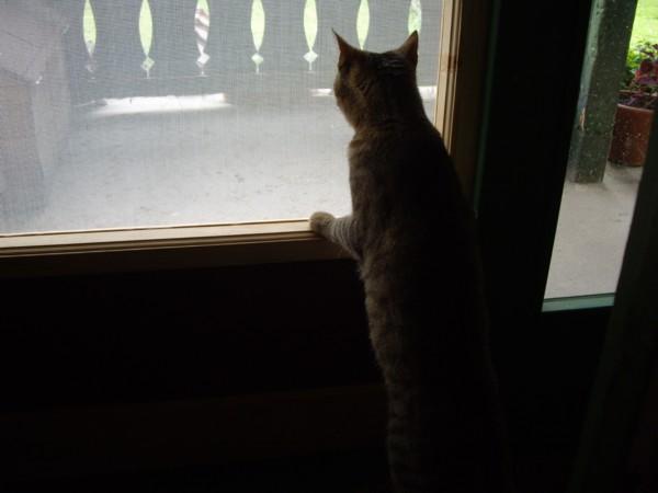és az ajtóban ácsorogni is érdekes.... innen jól meglehet figyelni a madarakat, és a kinti cicákat...