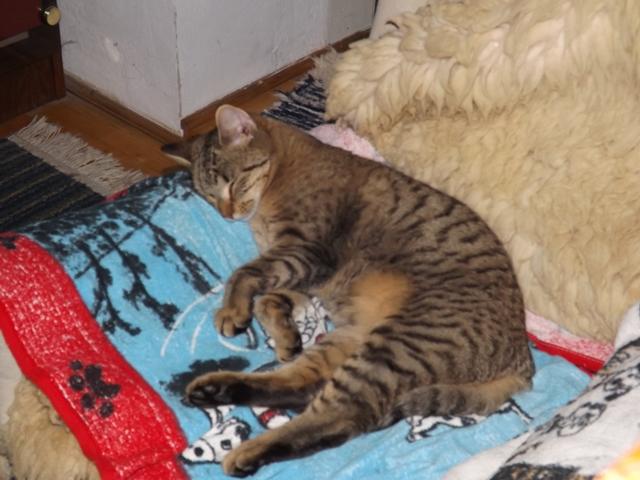 Felváltva alszanak a fotelban, ami persze az én kedvenc helyem is.<br />Amúgy a cicáim tiszták, féregtelenítve stb.. vannak, nem másznak asztalra, szobatiszták....
