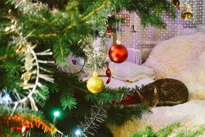 Persze, hogy a cicák is bent karácsonyoztak egy kicsit :-) <br />Ez itt Luluka, Tóniék cicája.