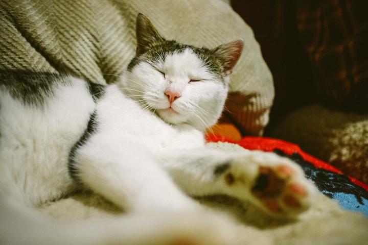 Dönci se vékonyabb Misinél.... szeret a fa alatt aludni...