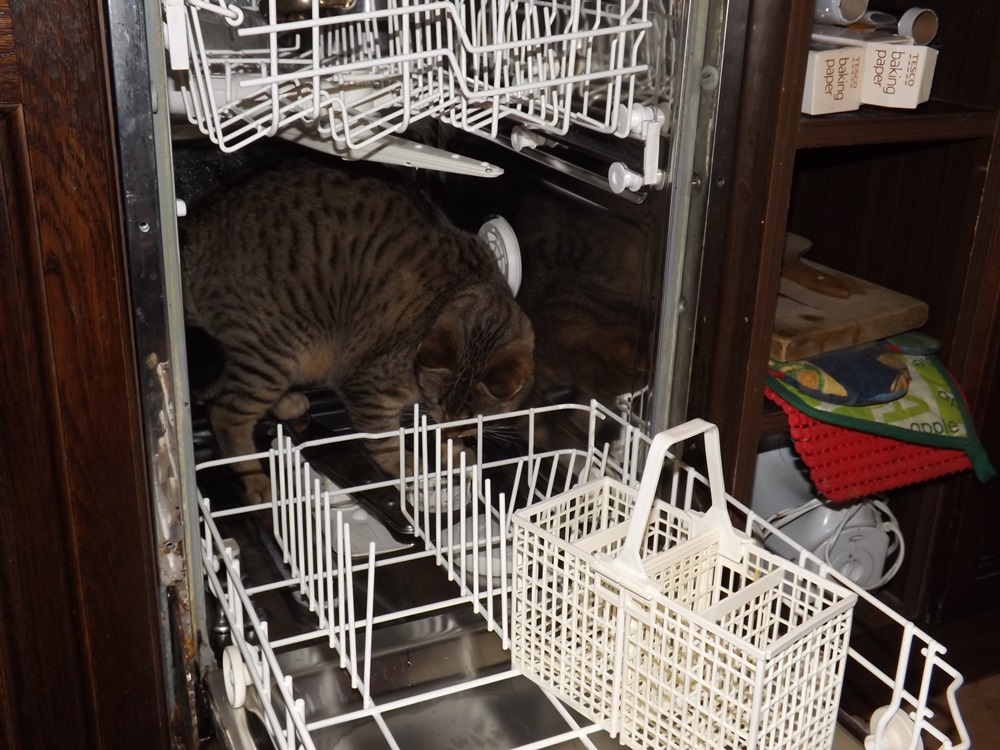 Mihály előtt nem maradhat nyitva a mosogatógép..