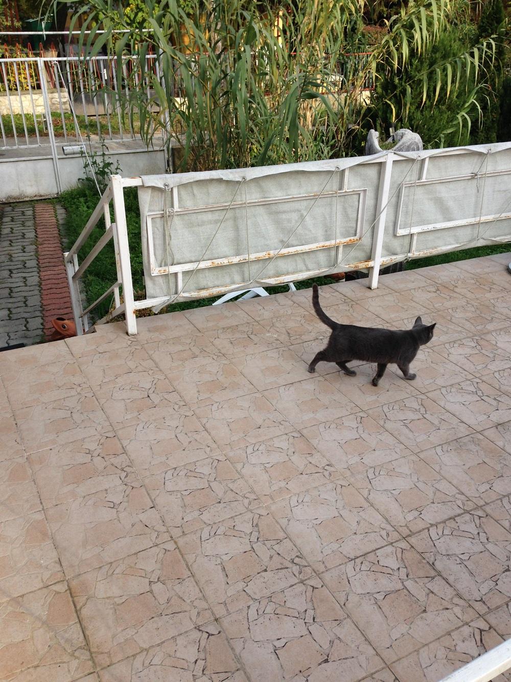 Balatonon a nyári cicákból az egyik kölyök.... :)