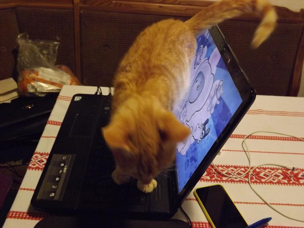 Samu az új talált cica is kezdi felfedezni a házat, bár még csak módjával, kis időket tölthet bent. Oltva van stb.. de félek... ugyanis még nem szobatiszta...