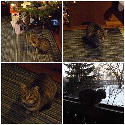 Frici-Öcsi a karácsonyi macskás képekből kimaradt, most pótlom, elvégre ő is családtag :-)