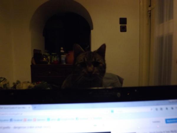 ez már itthon készült az előbb..... az első blogbejegyzés iránt érdeklődőt fotóztam le... - Mihály mit keresel az asztalon??!!!