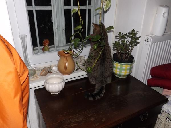 Egész éjjel Mihály az ablakban ült és nézte, ahogy hull a hó...