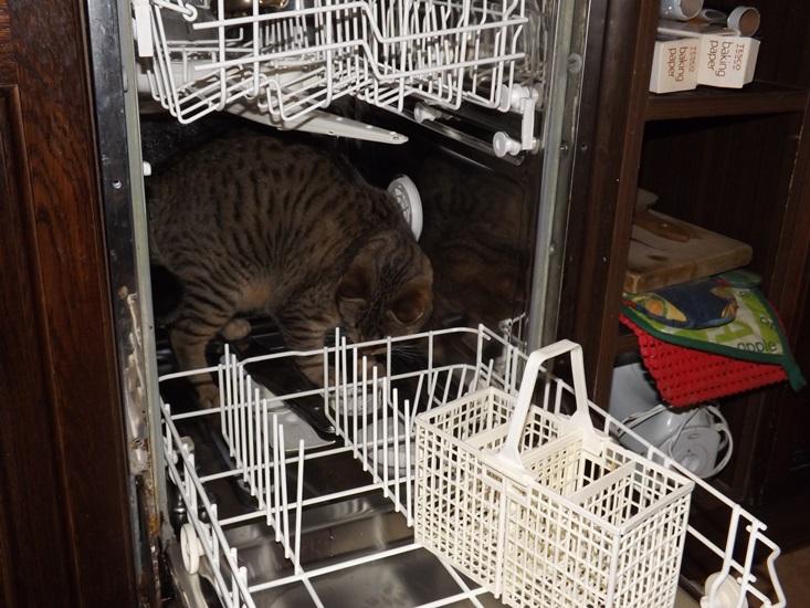 mosogatás....