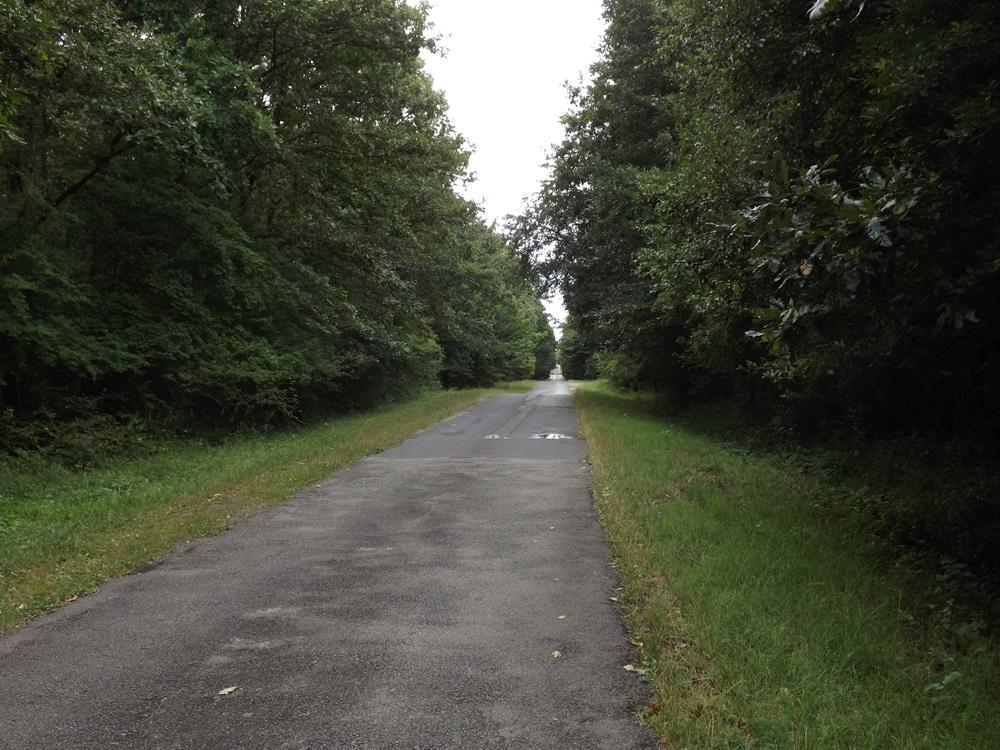 ez az erdei út már a Sümeg és Tapolca közti összekötő útra vezet..