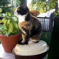 Macskák - na nem Eliot-Webber féle, hanem a mieink itthon