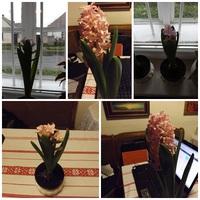 virágom.... virágom
