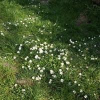 Hurrá, tavasz van!! :)