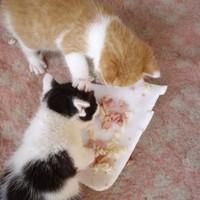 Süti és Molly