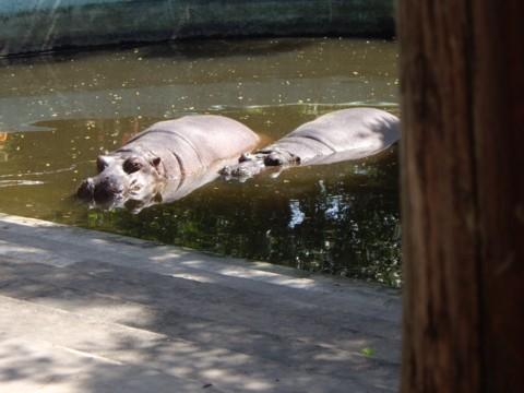 állatkert1.jpg