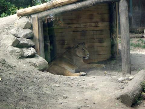 állatkert11.jpg