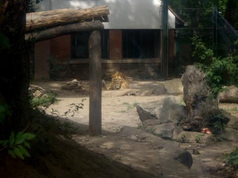 állatkert12.jpg