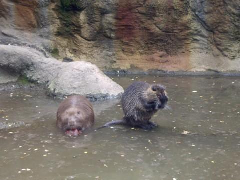 állatkert14.jpg