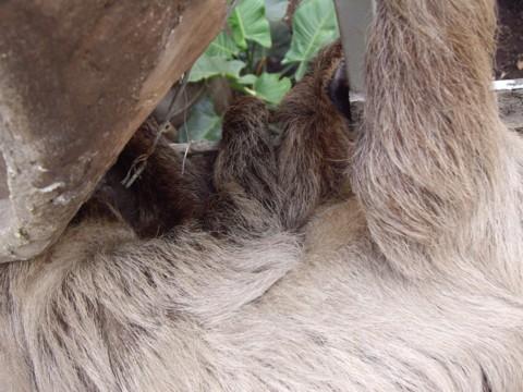 állatkert17.jpg